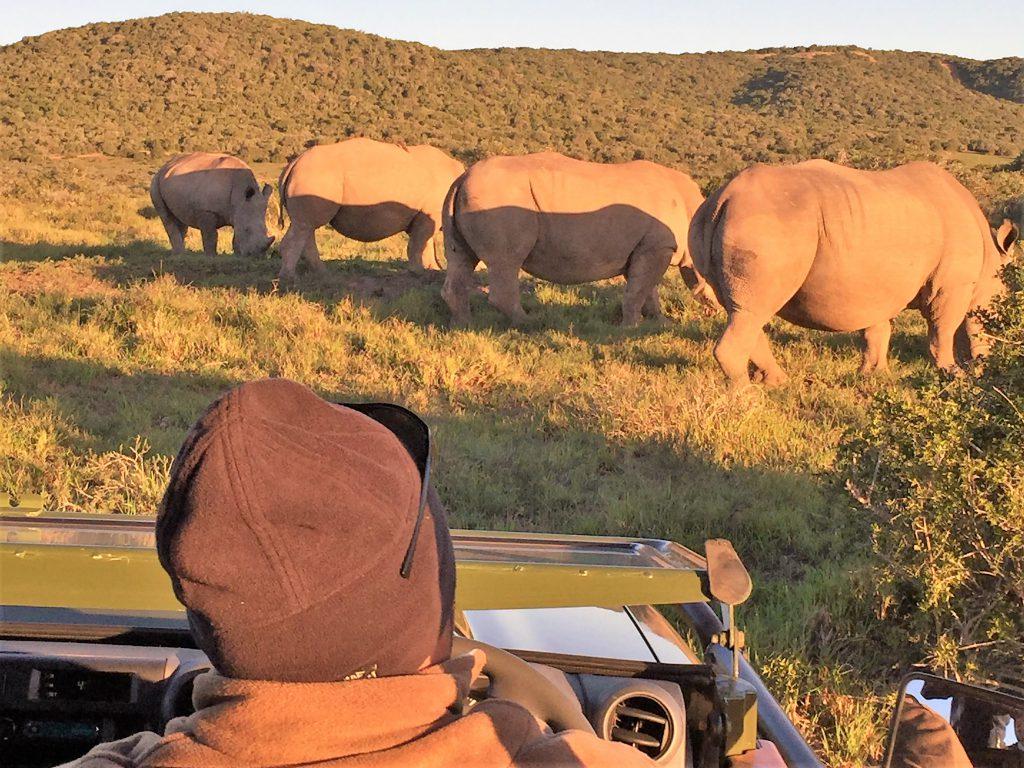 Rinocerontes em safári na África do Sul