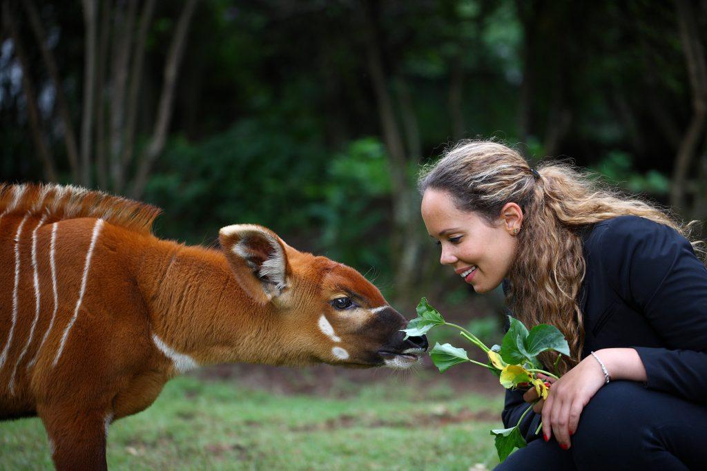 Mount Kenya animal orphanage bongo